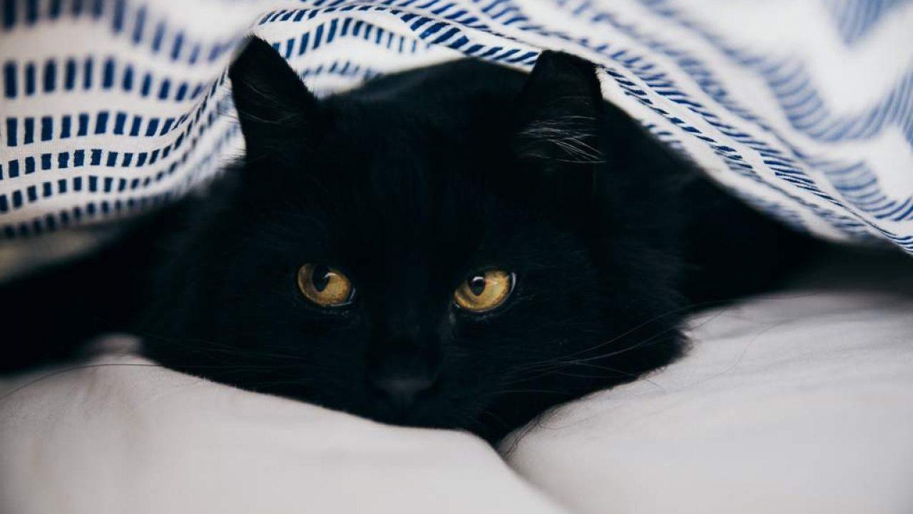 No des en adopción gatitos durante octubre! - Noticias Chihuahua